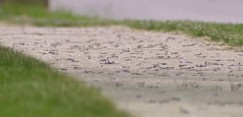 http://rhyscorhys.files.wordpress.com/2013/09/dead-worms-in-ohio.jpg